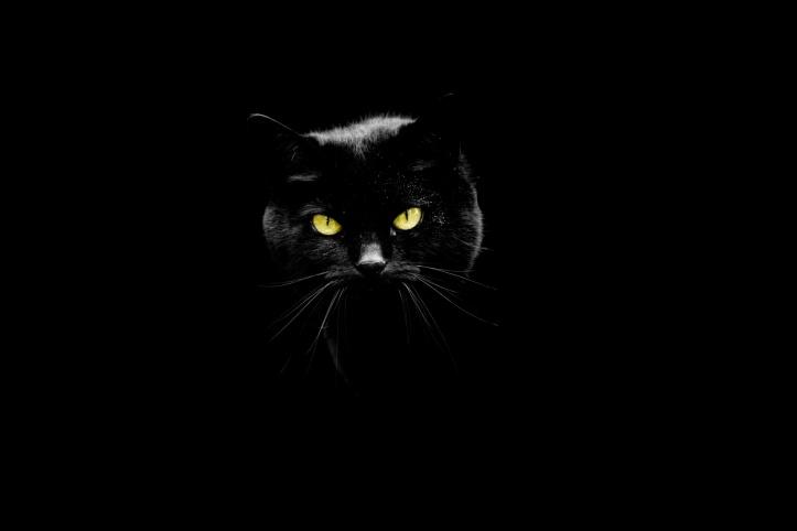 black-cat-1476284792R3S